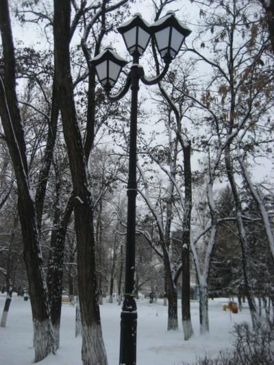 Необычные деревья животные