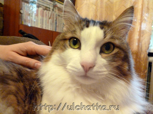 Наш кот Кузьма Капусткин
