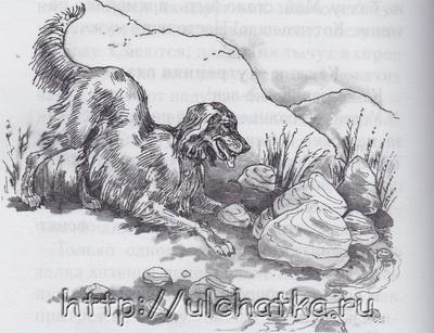 Охотничья избушка Красильников Николай