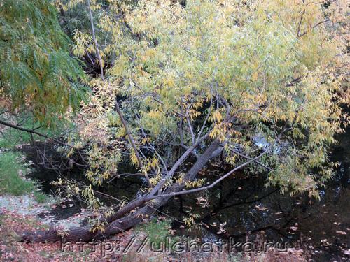 Осень фотографии природы