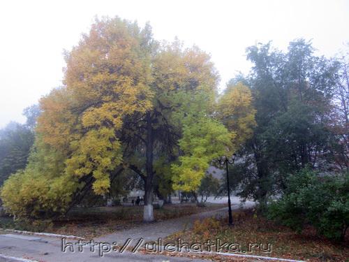 Фотографии осень золотая